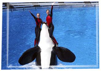 Pic-show-orca2.jpg
