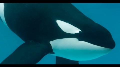 Meet Keet SeaWorld®