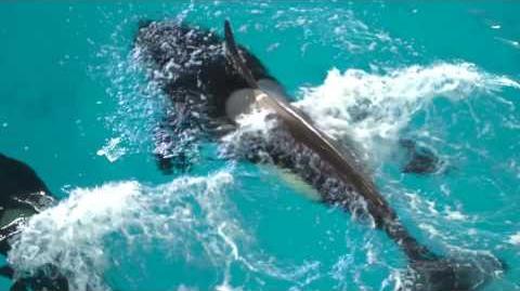 Happy_Birthday,_Takara!_SeaWorld®
