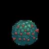 Belladonna Seed
