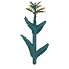 Plant corn 3.png