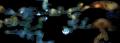 Bash map