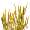 Out of Reach Wheat Icon.png