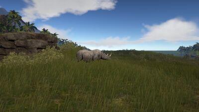 Rhino4.jpg