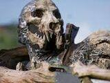 Plague Sower's Skull