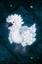 Pet Pearlbird.png