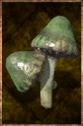 Common Mushroom.png