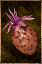 Cactus Fruit.png