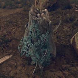 Hollowed Trunk