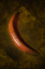 Baked Crescent.png
