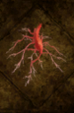 Bloodroot.png