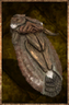 Insect Husk.png