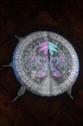 Enchanting Table Shield.png