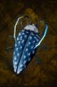 Funnel Beetle.png
