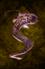 Grilled Eel.png