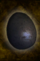Black Pearlbird Egg.png