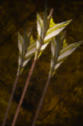 Holy Rage Arrow.png