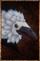 Pearlbird Mask.png