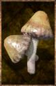 Grilled Mushroom.png