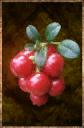 Gaberries.png