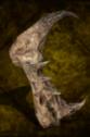 Mantis Granite.png