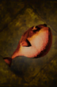 Grilled Pypherfish.png