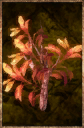 Seared Root.png
