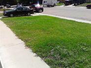 Lawn, part 4
