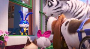 Secretlifeofpets2-animationscreencaps.com-6976