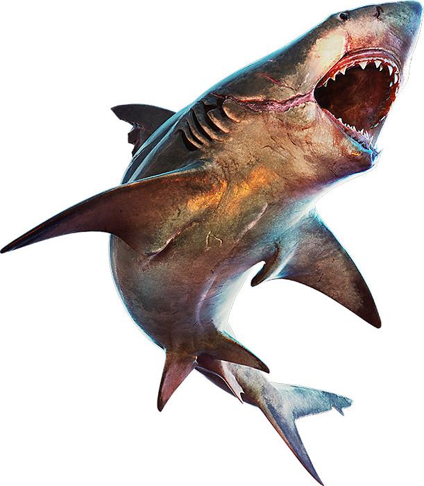 Bull Shark (Maneater)