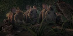 Four Rabbits Watch