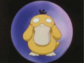 Psyduck in Misty's Pokeball