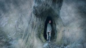 TLJ Rey inside Uneti Tree