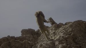 Scar Throws Mufasa