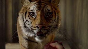 Mit tiger