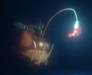 Marlin fighting the Anglerfish