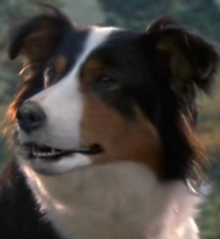 Jessie Animal Farm Heroes Wiki Fandom New video for you dog lovers, scary horror stories in which dogs saved the day :… jessie animal farm heroes wiki fandom