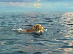 Reg 1024 lifeofpi tigerswim mh 072612