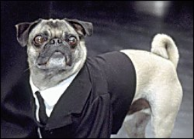 Frank the Pug.png