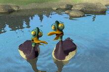 Duck-0.jpg