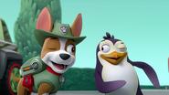 Tracker y pinguino