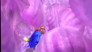 Marlin saving Dory from the jellies