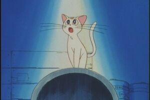 Meet Artemis the Cat