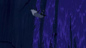 Meeko's graceful dive