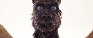 Isleofdogs-animationscreencaps.com-1392