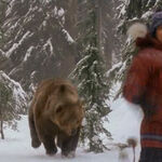 Ted Brooks chased by a grizzly bear.jpg