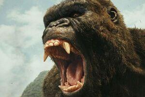 Kong-skull-island-1545128471