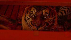 52831-life-pi-grabbing-cg-tiger-tail