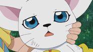Tailmon looking at Hikari (Ep. 49)