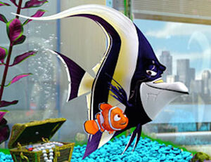 Nemo with Gill